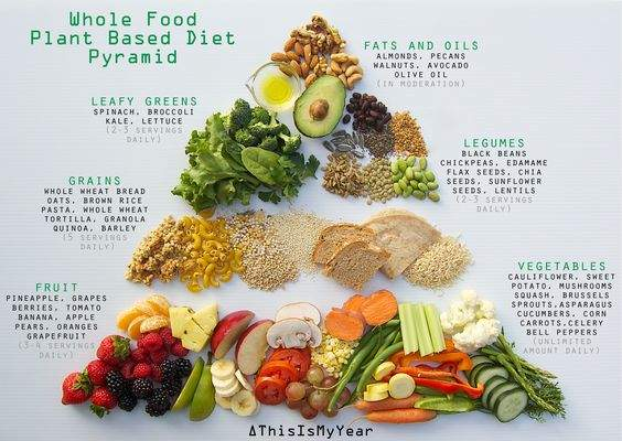 Image of the plant based food pyramid to help people starting a plant based diet