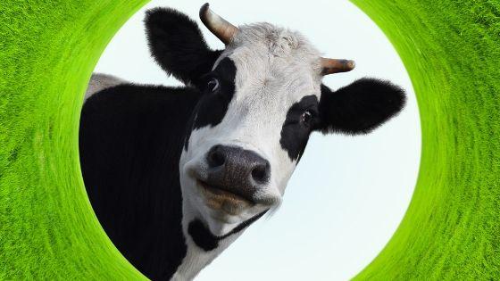 Plant based protein pro - saving animals